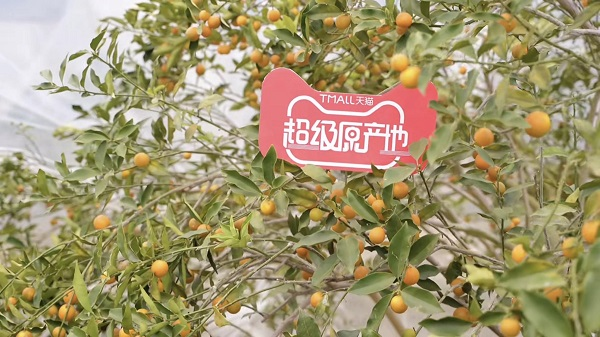 """年货节天猫超级原产地直播""""挖宝"""",阿里助推县域农产品数字化上行"""